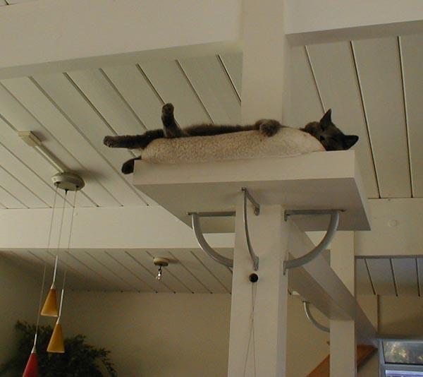 棚,柱,作り付け 柱に作り付けられた猫の棚 | 住宅デザイン 住宅デザイン 気になった住宅のバー