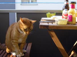猫とテラスで朝食
