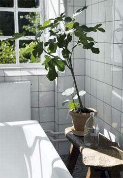 バスタブ脇のスツールと観葉植物.jpg