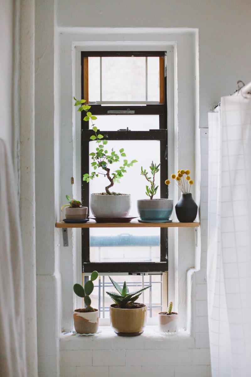 棚と出窓にたくさんの盆栽的な鉢がディスプレイされた、縦長の上げ下げ窓の窓際