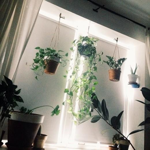 たくさんの観葉植物のある窓際