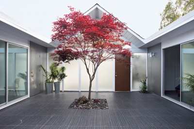 紅葉するもみじの木のある中庭