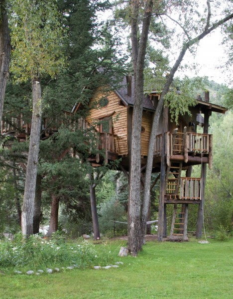 森に建つツリーハウス