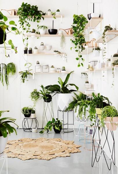 壁面にたくさんの植物用の棚の造作されたリビング1