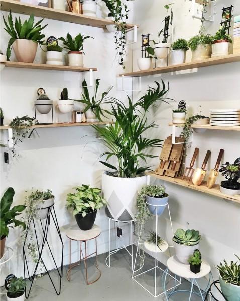 壁面にたくさんの植物用の棚の造作されたリビングのコーナー