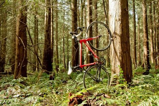 自転車用壁掛けラック ウォールマウントラック CLUG 森の木に