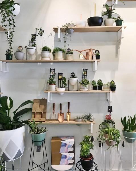 壁面にたくさんの植物用の棚の造作されたリビング2