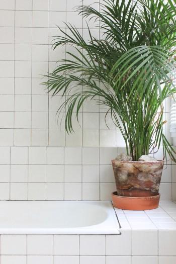 白いタイル貼りの明るく開放的な白基調のバスルームのコーナーに置かれた観葉植物